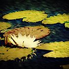 Altered Waterlily by DeeZ (D L Honeycutt)