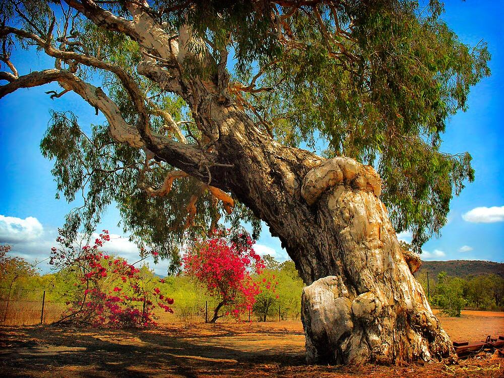 Ancient Paperbark Tree by Frank  McDonald