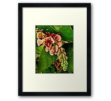 The Beauty of the Ground Nut Framed Print