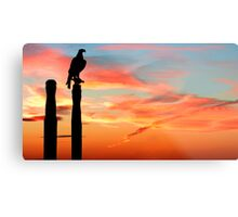 Perched Eagle at Sunset Metal Print