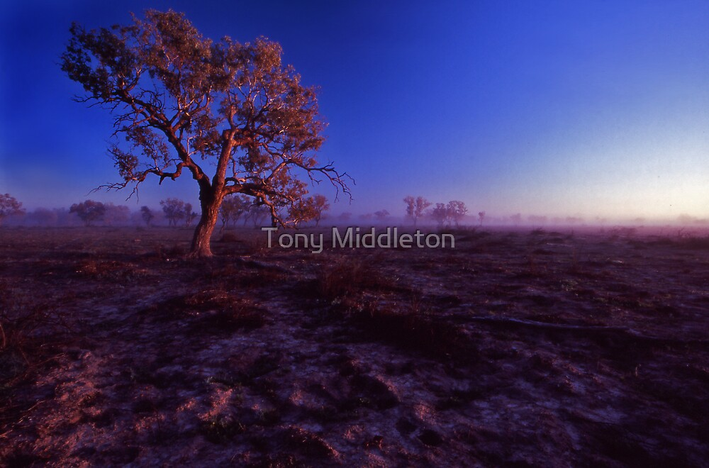 feeling the sun's warmth by Tony Middleton