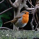 A Christmas Robin by Rivendell7