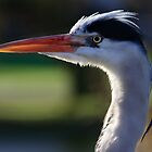 Heron in Profile by Lucy Hollis