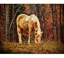 Buckskin Horse in Autumn Photographic Print