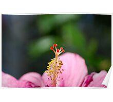 A photo of a Azalia flower 002 Poster