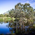 Trees reflected at Dunkeld Community Park, Victoria by Elana Bailey