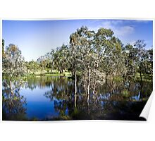 Trees reflected at Dunkeld Community Park, Victoria Poster