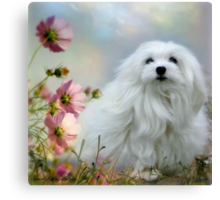 Snowdrop the Maltese - A Soft Summer  Breeze Canvas Print