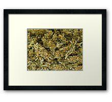 cannabis Framed Print