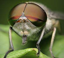Aviator by blepharopsis