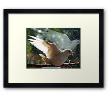 Have You Ever Seen The Rain - White Dove - NZ Framed Print