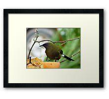 I'm As Sound As A Bell!!! - Bellbird - NZ Framed Print