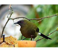I'm As Sound As A Bell!!! - Bellbird - NZ Photographic Print