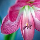 Pink by Darren Newbery