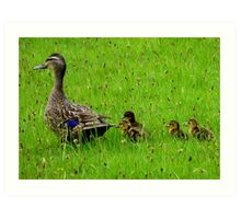 Come on Kids Move Along! - Mallard Ducks - NZ Art Print