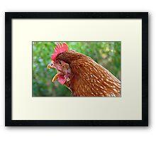 I Laid an EGG! - Red Hen - NZ - Southland Framed Print