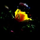 Rose Illumination by Michael Reimann