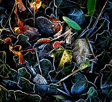 The frozen leaves with the last little ray of sun by Imi Koetz
