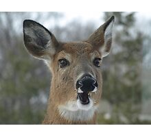 Faces of Deer Series #2 Photographic Print