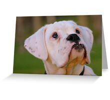 Is That Treat Really For Me??? - Boxer Pup - NZ Greeting Card