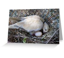 Perfect Beginning - Mother & Child - African Collared Dove - NZ Greeting Card