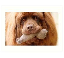 Pleeeese! come play with us - Big Doggy - NZ Art Print
