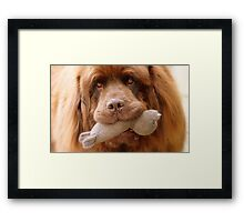 Pleeeese! come play with us - Big Doggy - NZ Framed Print