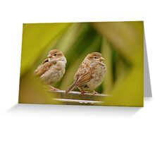 That's A Very Strange Eye Looking At Us.. - Sparrow Fledglings - NZ Greeting Card