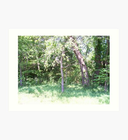 Looking Upward in our Sycamore trees. Art Print