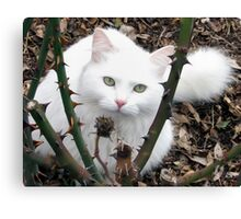 Fur and Thorns Canvas Print