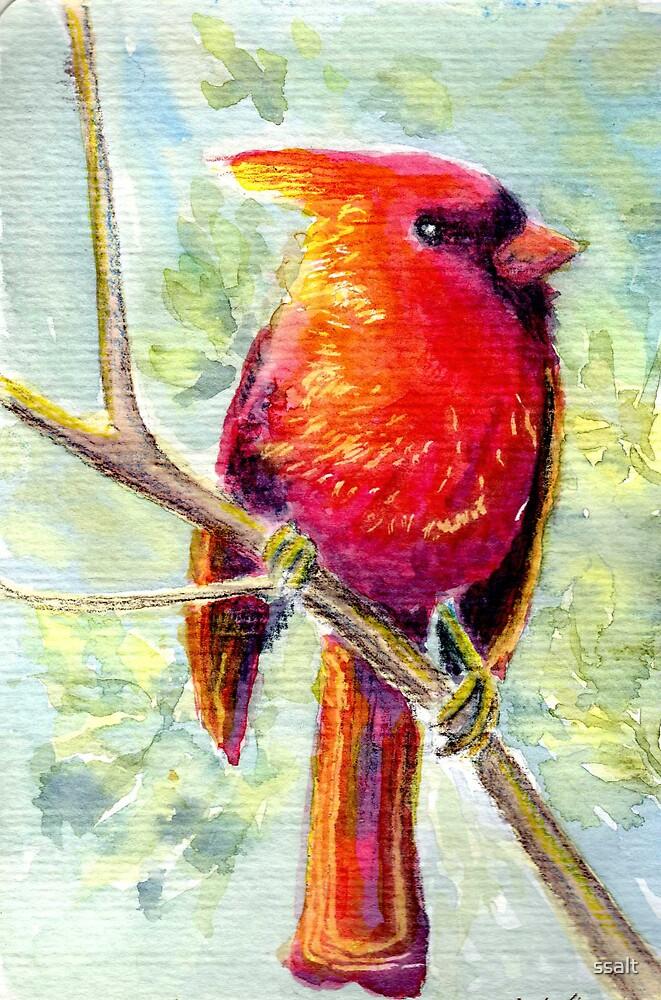 Red Cardinal by ssalt