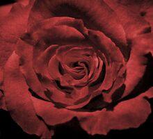 Velvet Rose by BluAlien