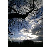 """""""Black Trees"""" Photographic Print"""