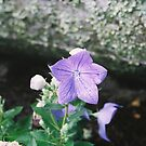 Balloon Flower by Rebecca Madden