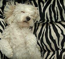I don't care if it's Monday. Don't wake me up! by Idil