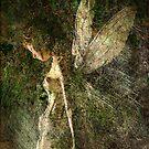 Titania by Thomas Dodd
