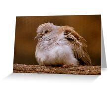 A Diamond In The Rough - Juvenile Diamond Dove - NZ Greeting Card