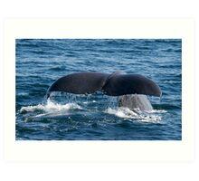 Sperm Whale Fluke Art Print