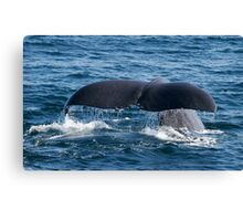 Sperm Whale Fluke Canvas Print