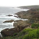 Tathra Coastline, NSW Australia by Stephen  Shelley