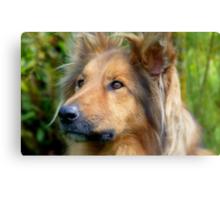 Lassie Come Home! - Cross Collie Dog - NZ Canvas Print