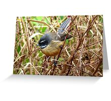 The Thorn Birds - Fantail on Thorny Branch - NZ Greeting Card
