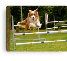 I Believe I Can Fly... I Believe... - Border Collie - NZ Canvas Print