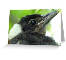 Loosing The Baby Fluff! - Magpie - NZ Greeting Card