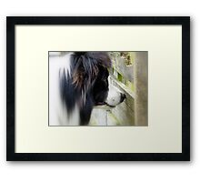 I Keep A Close Watch On These Sheep Of Mine... Border Collie - NZ Framed Print