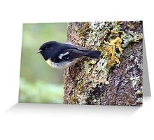 I'm The Scout For Today... Tomtit - NZ Greeting Card