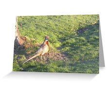 Friendly Pheasant Greeting Card