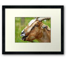 Calling All Kids! - Goat - Southland Framed Print