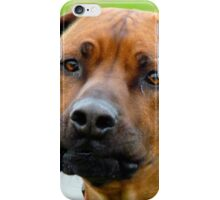 Aww.. You've Got Chooks Running Round Your Yard - Rhodesian Ridgeback - NZ iPhone Case/Skin