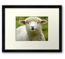 Oooh! La La... - Baby Lamb - Sheep - NZ Framed Print